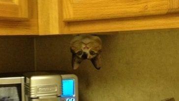 Kotek schowany