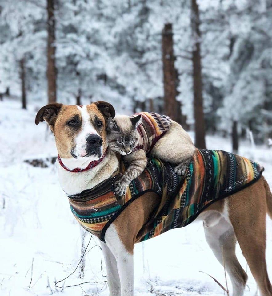Podróżujący pies z kotem