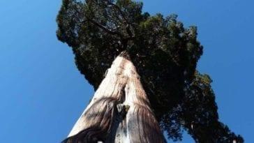 drzewo-min