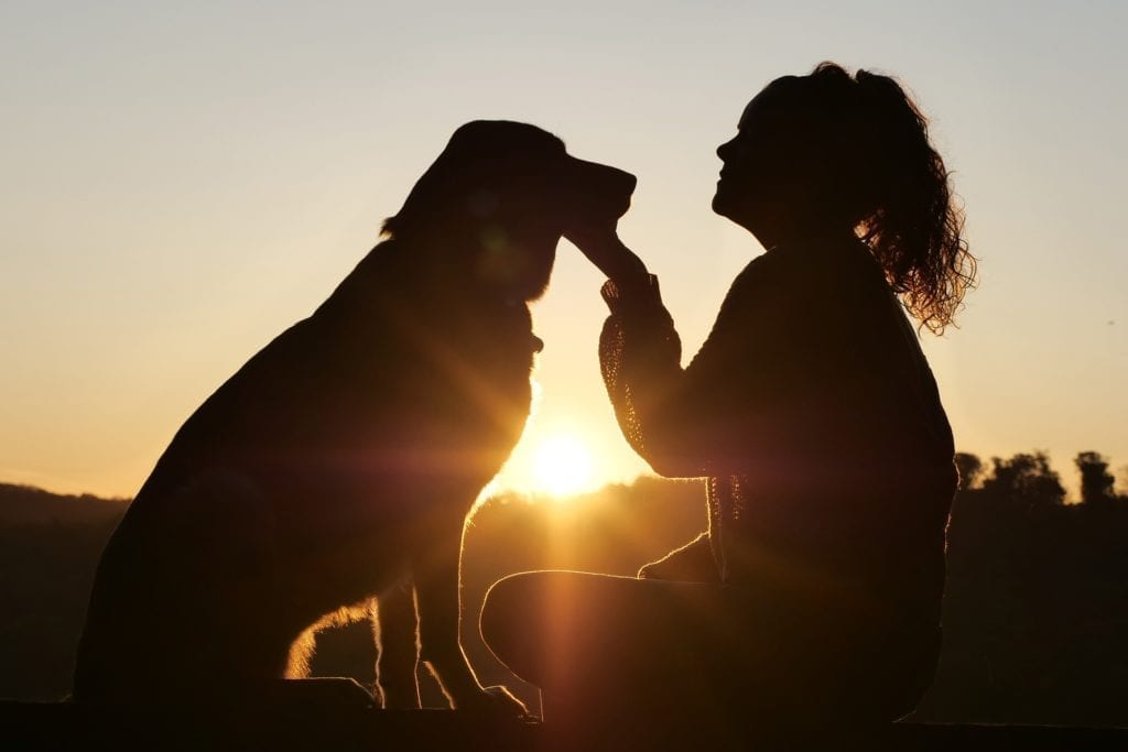 miłość do psa