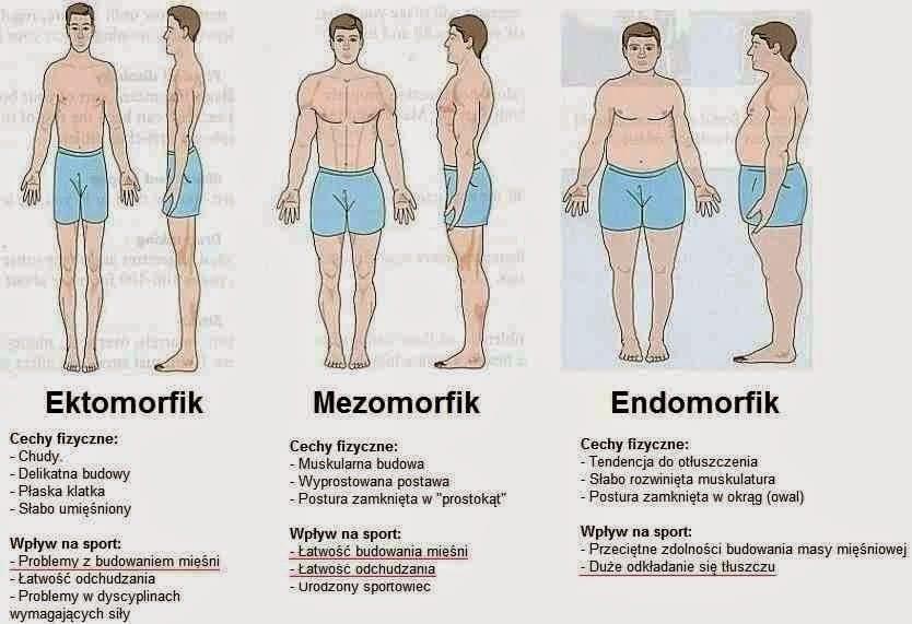 typu budowy ciała