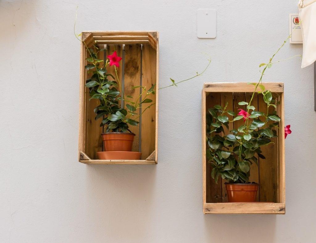 półki z kwiatami w doniczkach
