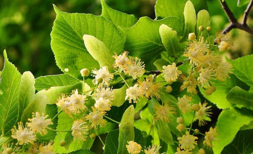 zielone liście z kwiatami