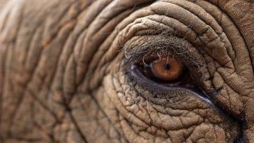 największe zwierzęta