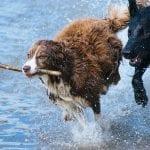 Najmądrzejsze psy